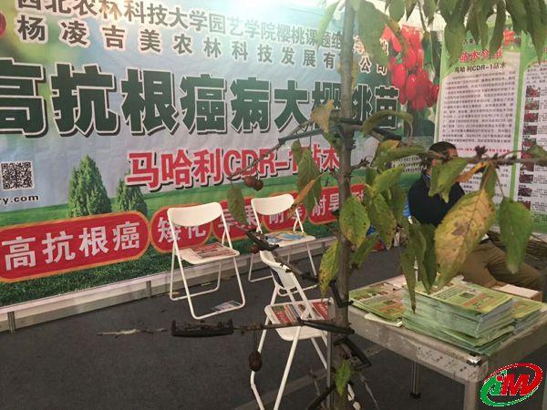 杨凌农高会上的展品